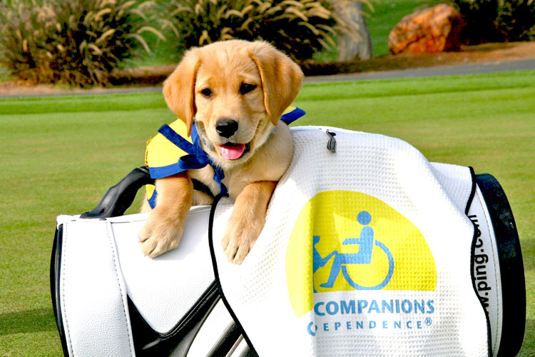 Cnaine Companions puppy and golf bag  with logo